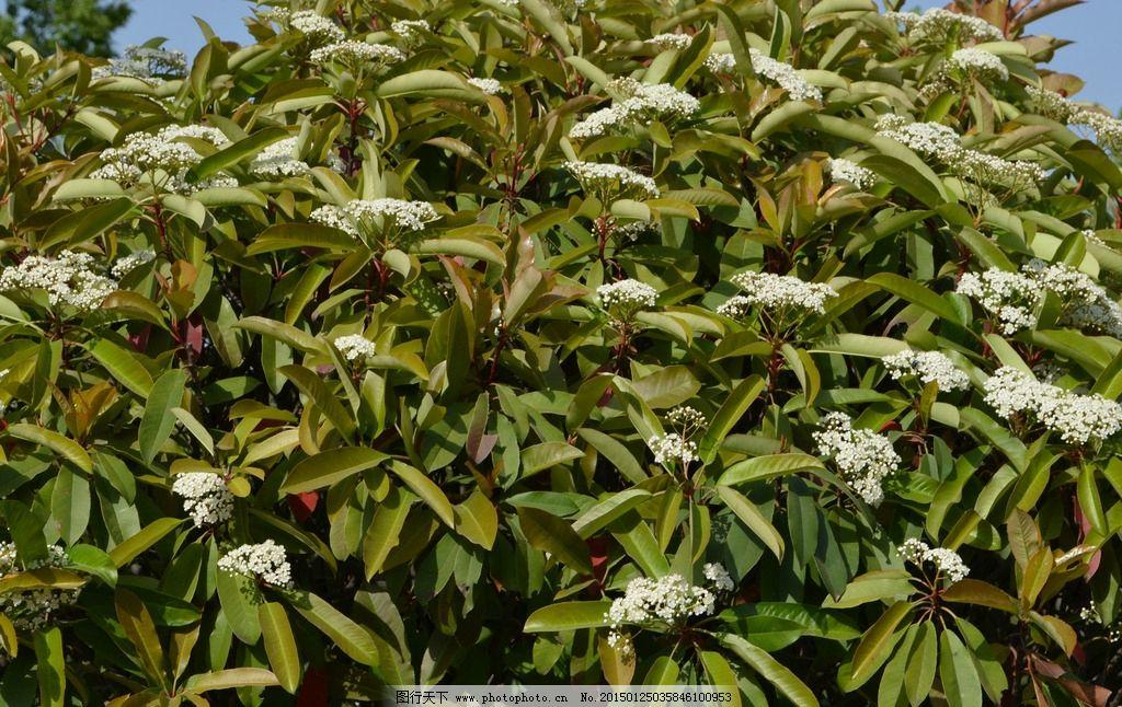 唯美 植物 自然 叶子 树叶 摄影 生物世界 树木树叶 72dpi jpg