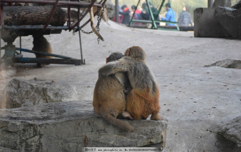 哥俩好 兄弟 猴子 北京动物园 动物 动物 摄影 生物世界 其他生物 300