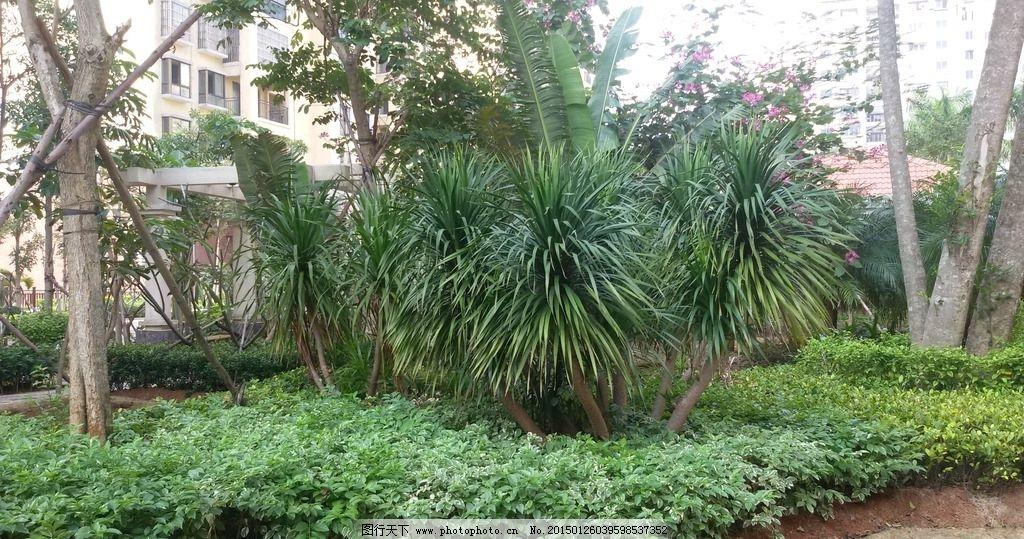 小区景观 小区环境 景观设计 小区绿树 小区植物 园林建筑集锦 摄影