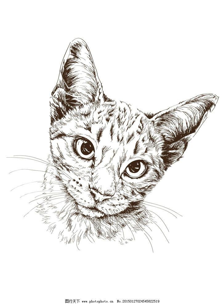 小猫 猫 动物肖像 动物矢量 时尚插画 时尚背景 动物插画 矢量 背景