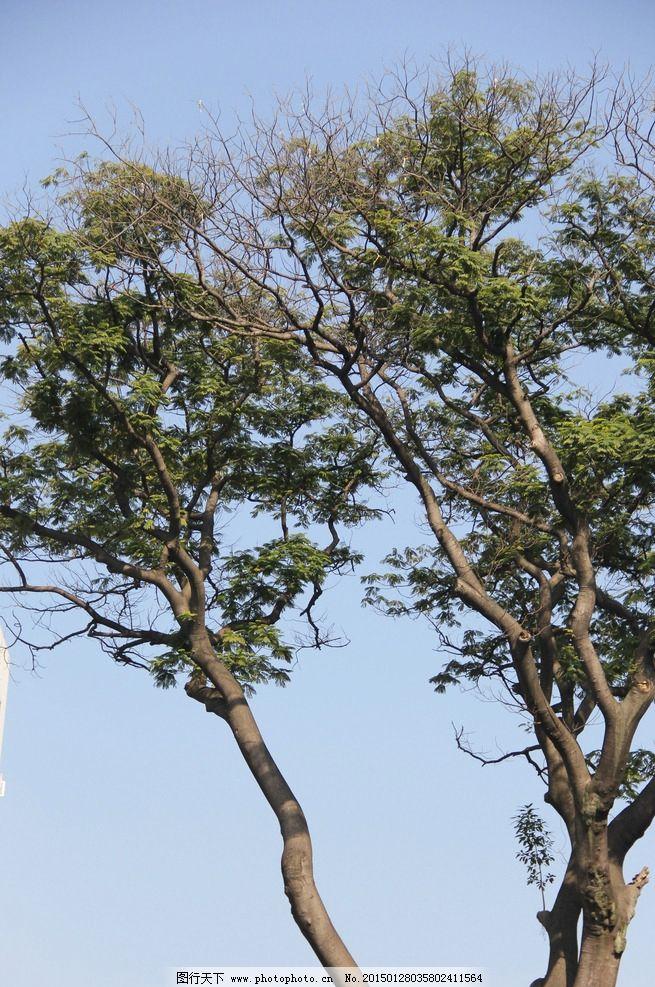 风景 树 天空 蓝天 白云 福州三房七巷 摄影 生物世界 树木树叶 72dpi