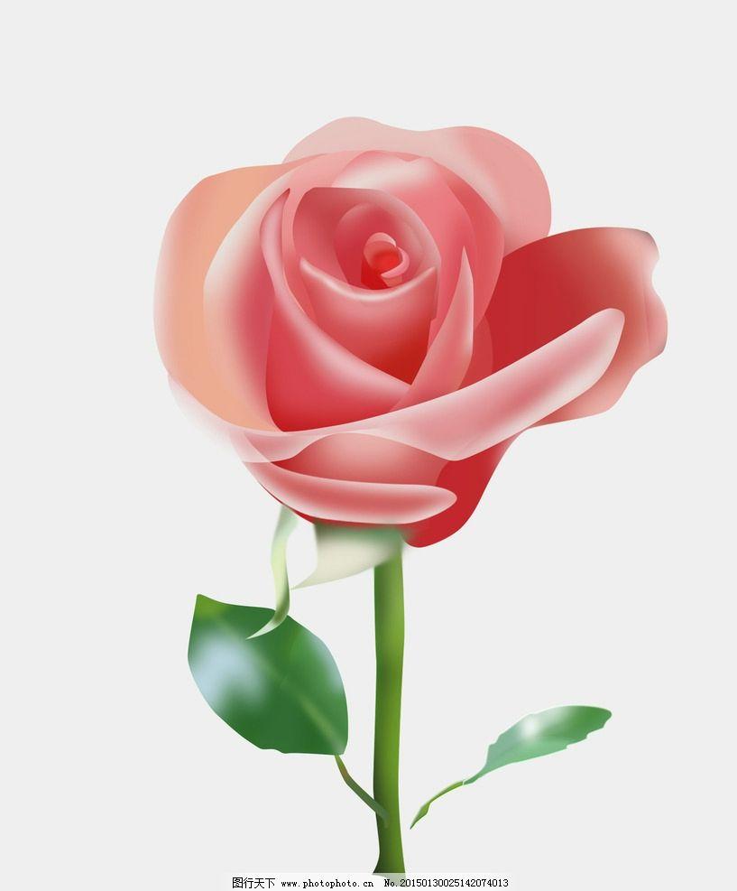 玫瑰 花图片图片