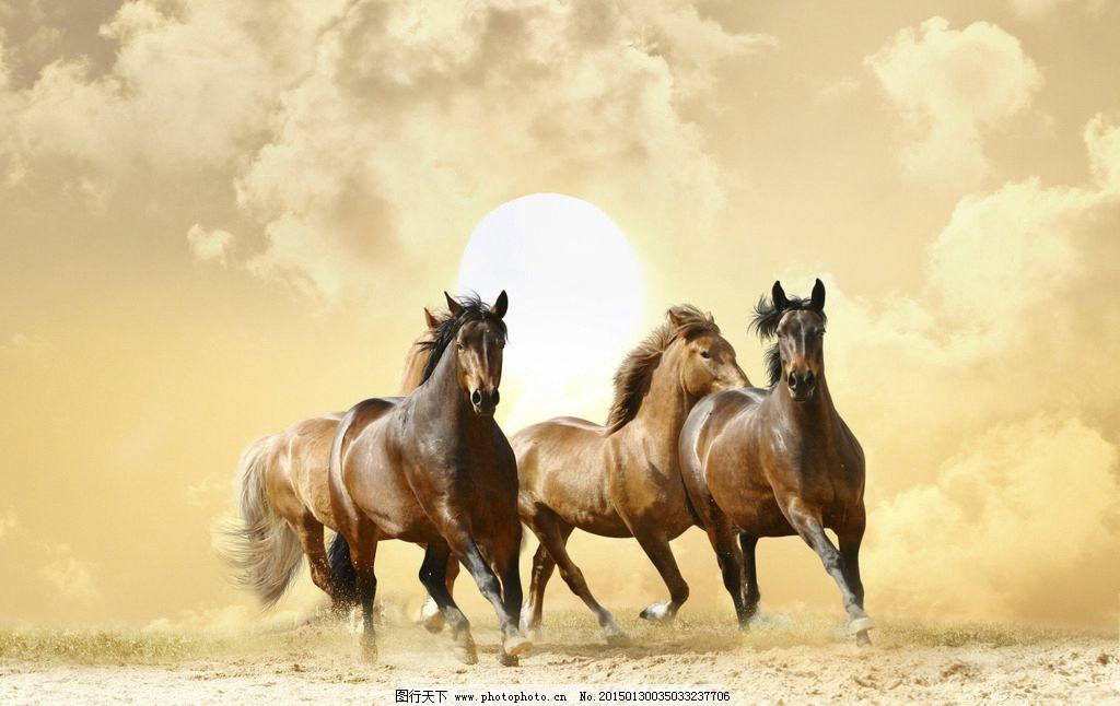 唯美 动物 野生动物 骏马 野马 奔驰 奔腾 炫酷 动感 摄影 生物世界