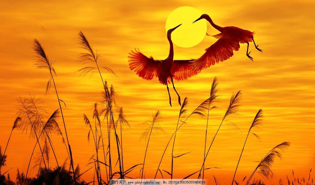 唯美 动物 野生动物 可爱 白鹤 夕阳 落日 日落 黄昏 傍晚 摄影 生物