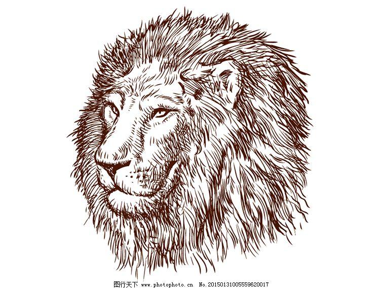 狮子头背景矢量素材免费下载 ai格式 动物 狮子 手绘 素描 线描 肖像