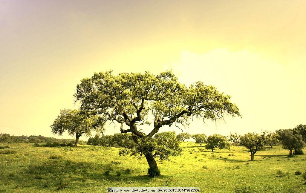 大树蓝天图片素材_山水风景_自然景观_图行天下图库