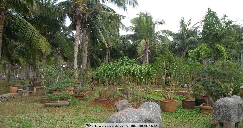 陶艺 景观小品 园林景观 椰树 景观摄影 园林建筑集锦 摄影 建筑园林
