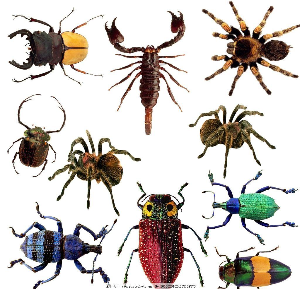 蜘蛛 爬行动物
