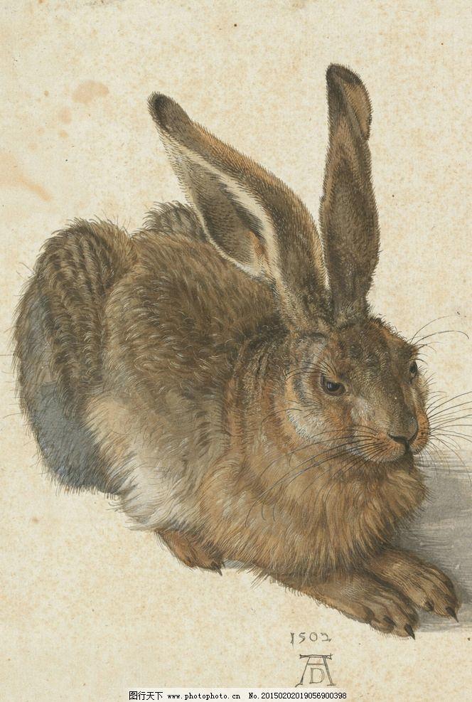 杜勒 1502年 野兔 名画 兔子  设计 文化艺术 绘画书法 96dpi jpg