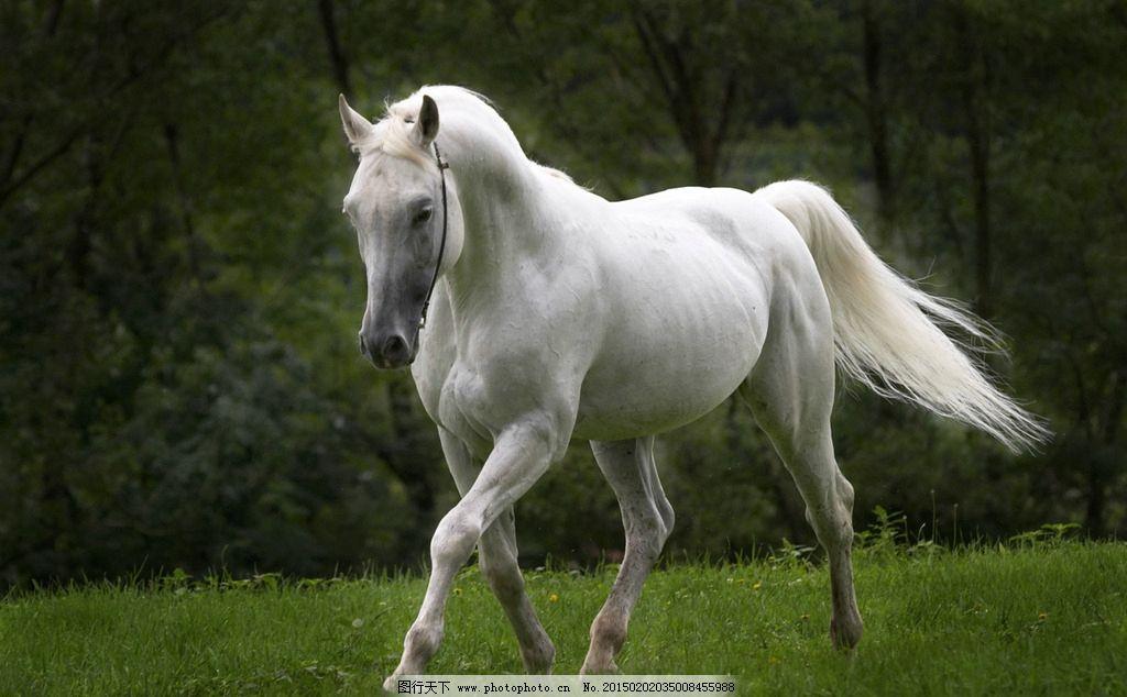 壁纸 动物 马 鸟 骑马 摄影 桌面 1024_634