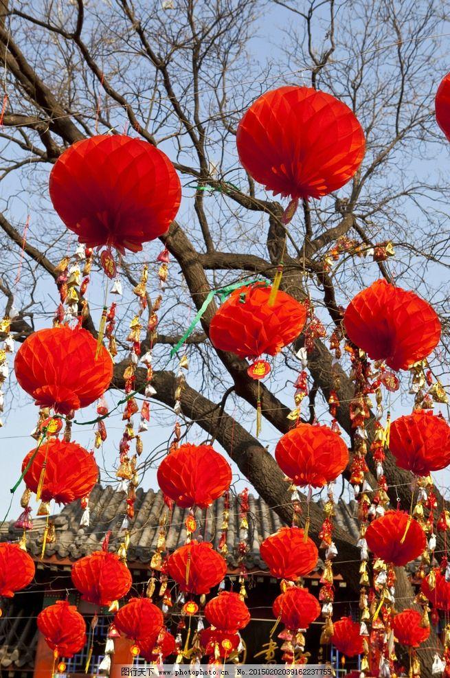 树上灯笼 红灯笼 过节 春节 喜庆 红色 中国 民俗 树枝 摄影