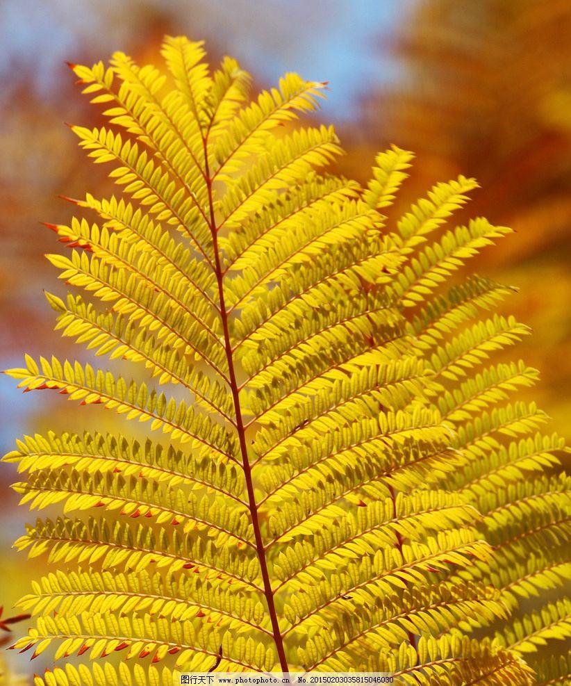 金色叶子图片