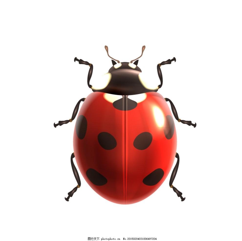 逼真七星瓢虫矢量素材 昆虫 动物 虫子 插画 矢量动物