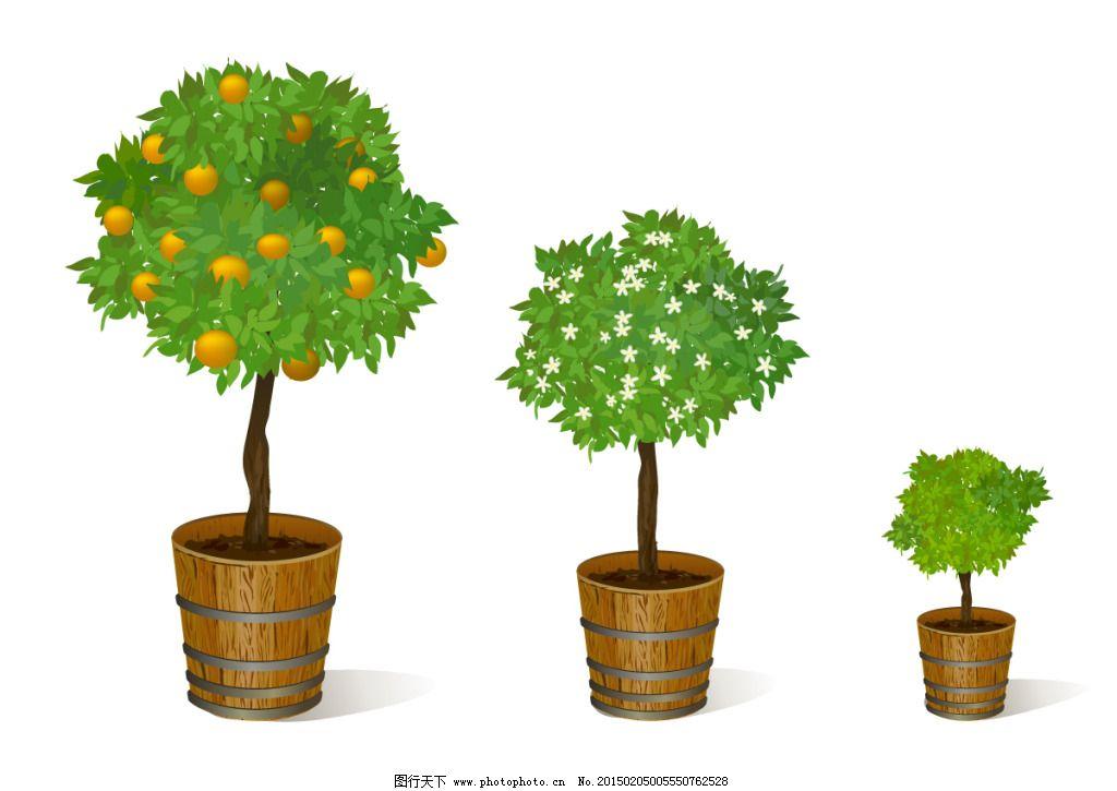 各种盆景树图片