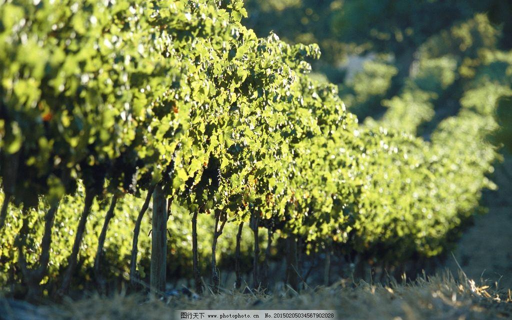 摄影图库 自然景观 田园风光  树林 果园 风景 深山 山区 绿色风景 绿