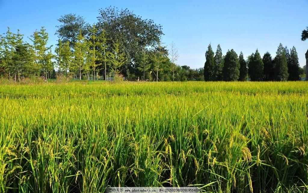 玉泉山景区 唯美 风景 风光 旅行 自然 北京 田野 田园 摄影