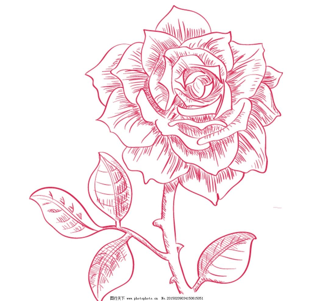 矢量手绘玫瑰花图片