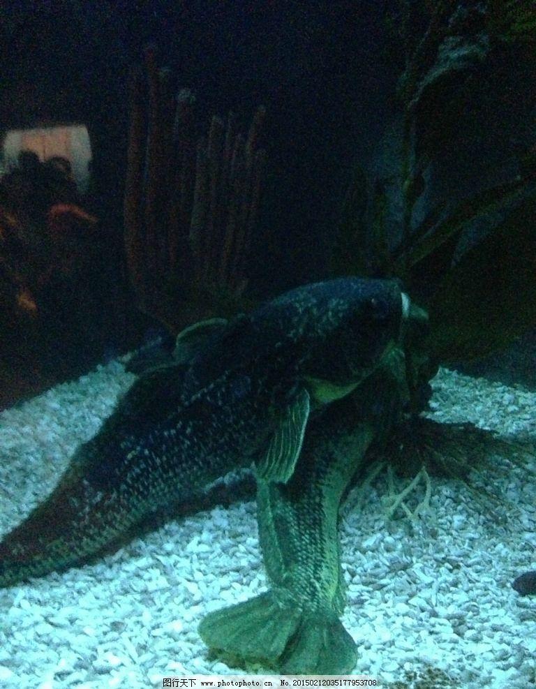 鱼 鱼儿 一对鱼 深海鱼 海底 海底鱼 摄影图 摄影 生物世界 海洋生物