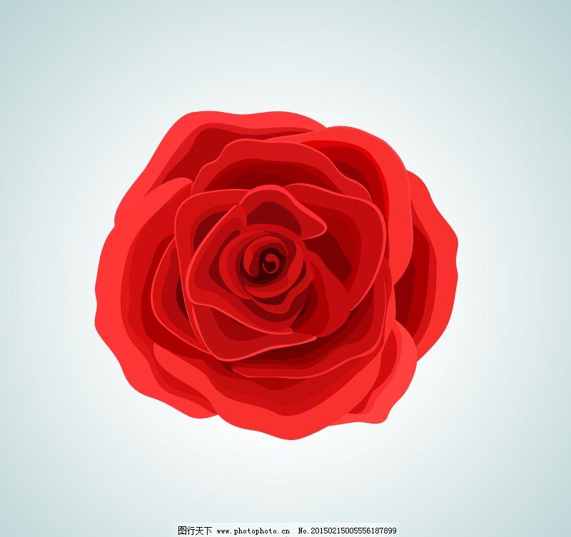 红色玫瑰花朵矢量素材.