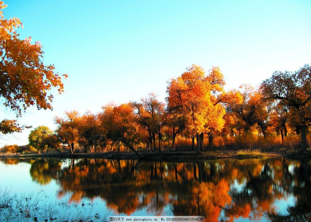 胡杨树图片