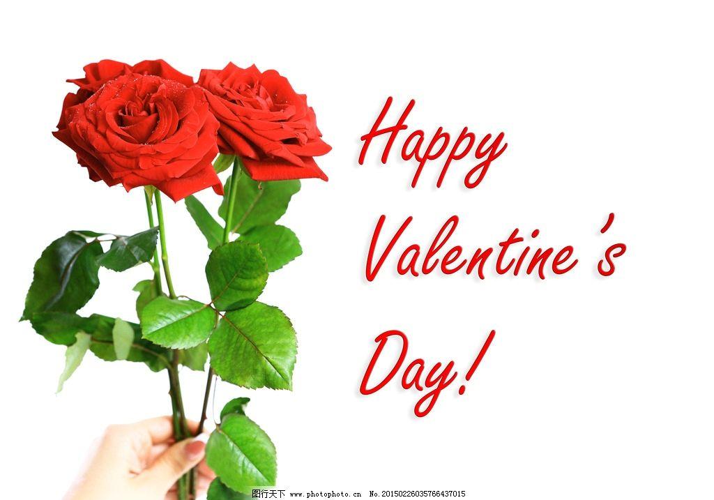 玫瑰花 红玫瑰 贺卡 情人节 红色花朵 唯美花朵 花卉 鲜花 红色 玫瑰