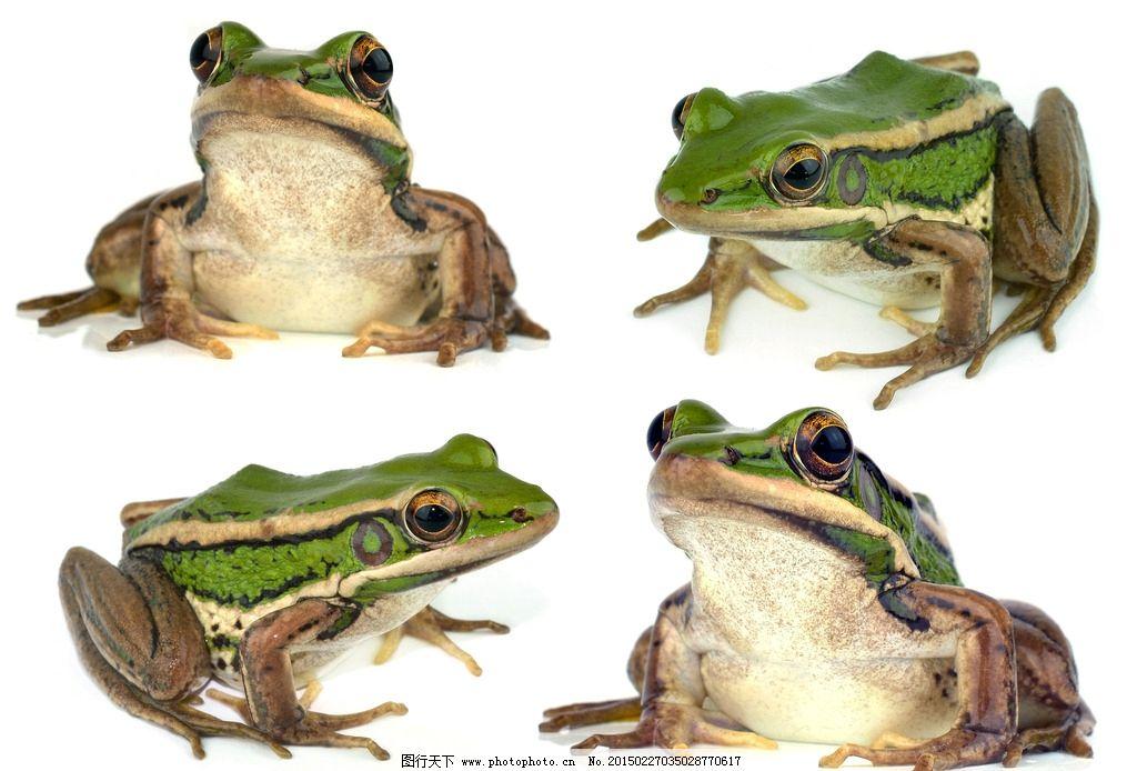 壁纸 动物 两栖 蛙 1024_694