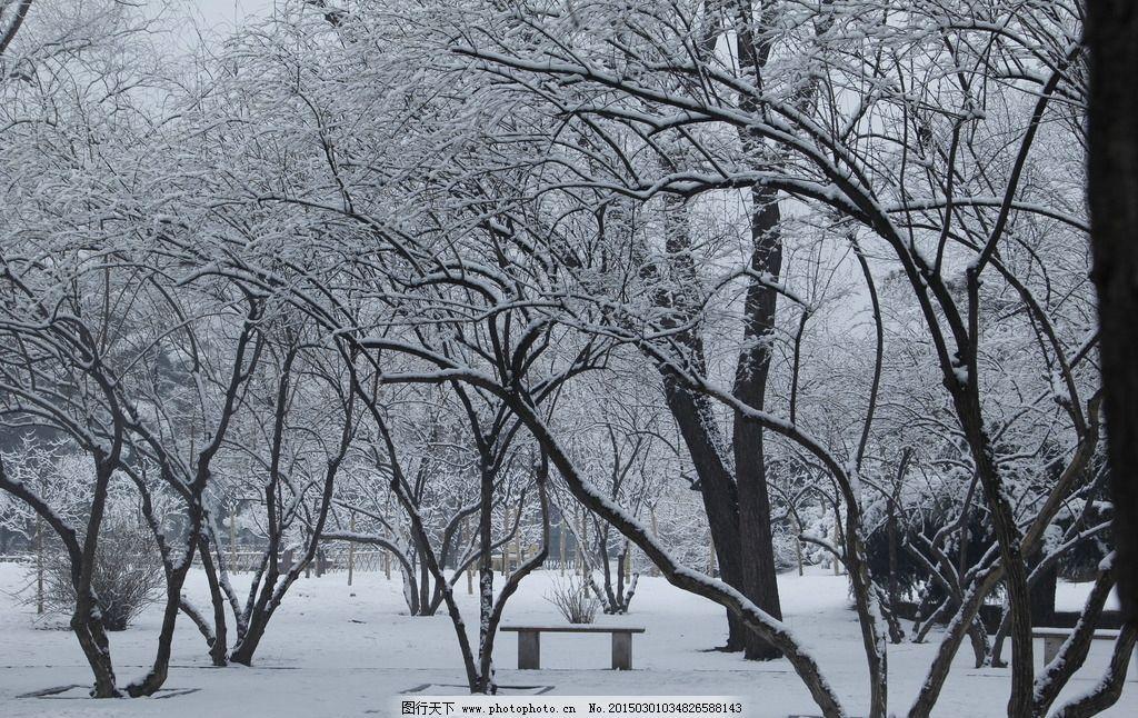 雪景 树木 冬天 风景 白色 摄影 自然景观 自然风景 72dpi jpg