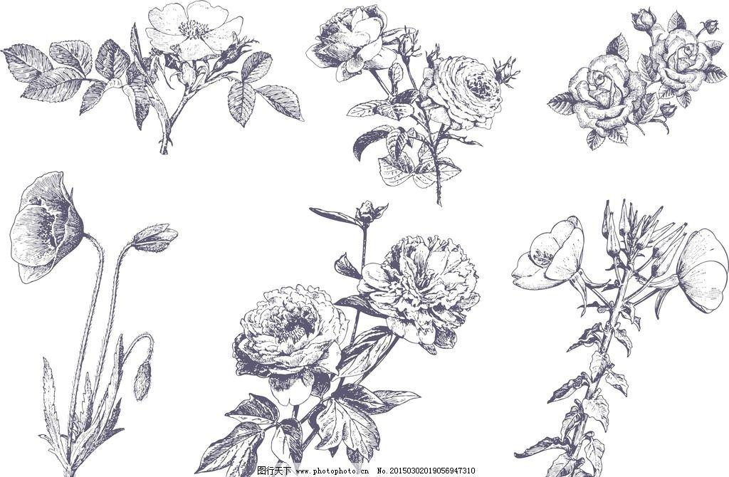 六种草本花卉写实手绘图片