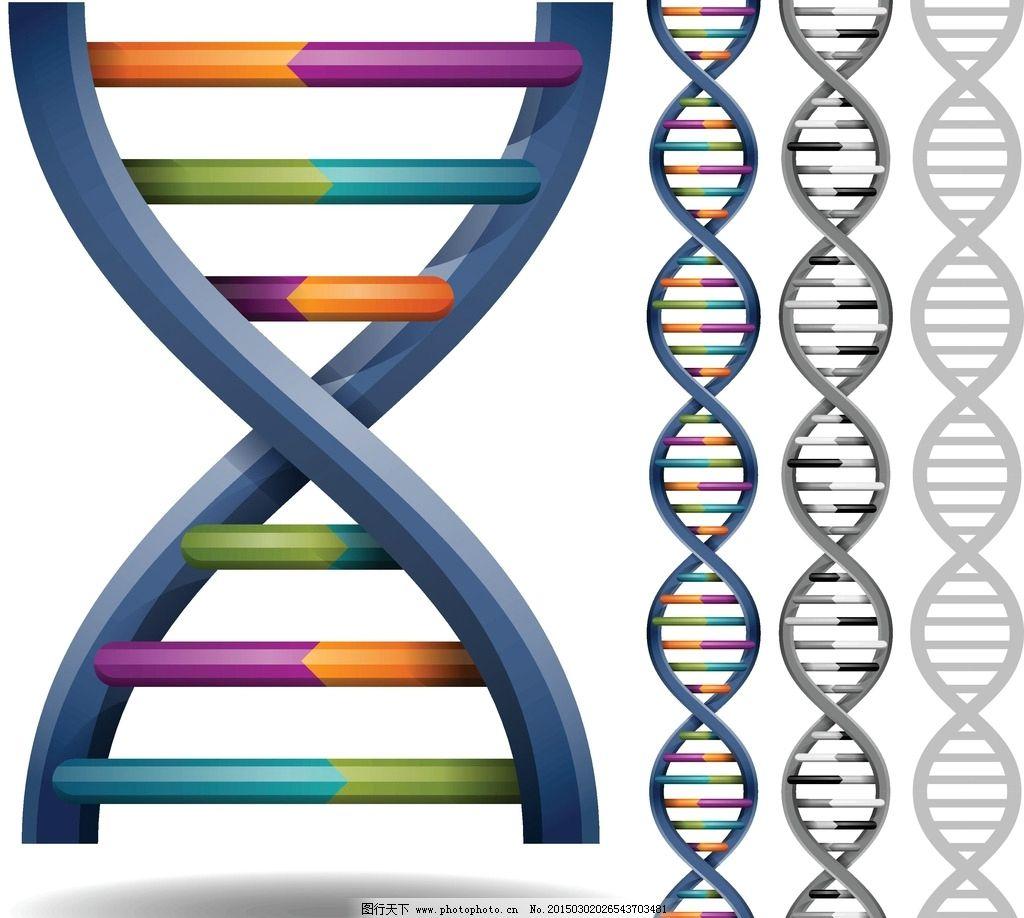 基因dna 分子结构 分子 医疗 医学 染色体 科学实验 结构 广告设计 矢