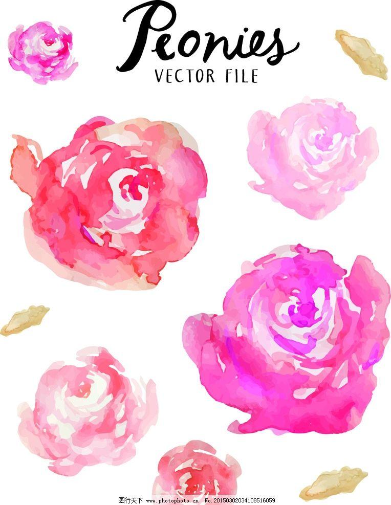 牡丹花 鲜花 手绘 花卉 植物 插画 手绘花朵 矢是 eps 设计 生物世界