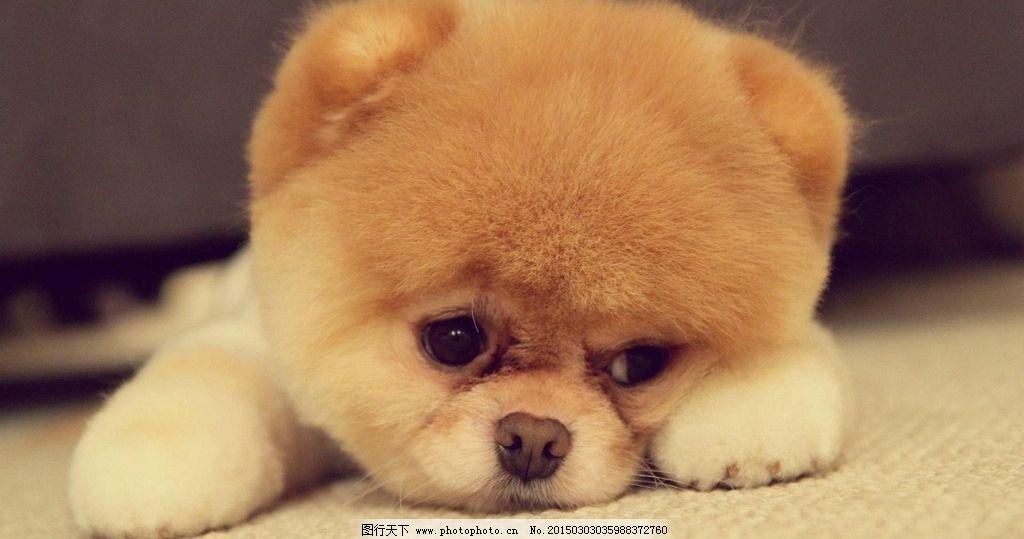 可爱动物小狗图片