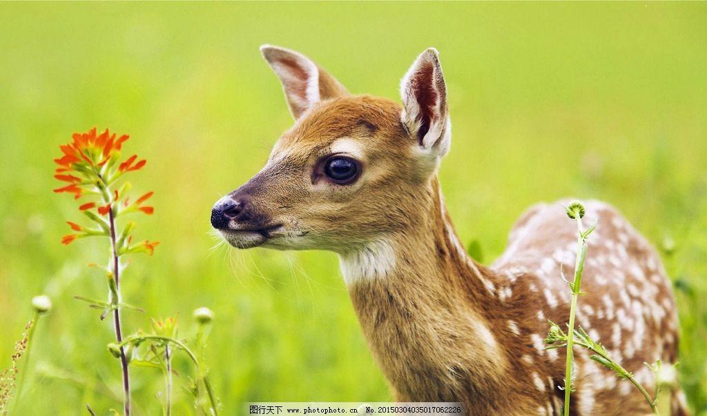 模仿动物妆图片
