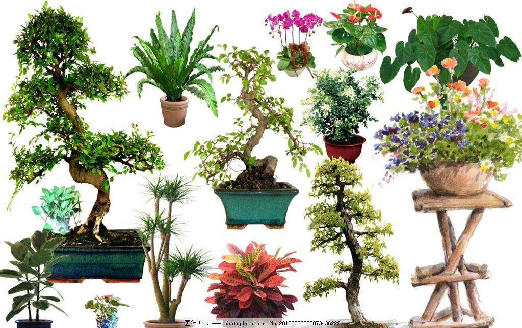 盆景花木景观素材 抠图素材图片