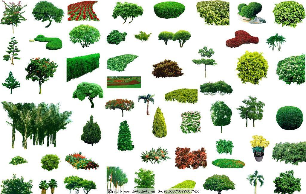 ps植物素材 植物 场景素材 灌木 景观设计素材 设计 psd分层素材 背景