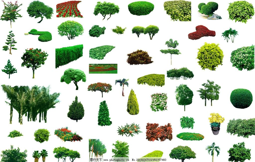 ps植物素材图片