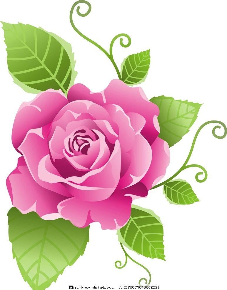 玫瑰 绿叶 花朵 矢量 粉色 设计 生物世界 花草 cdr