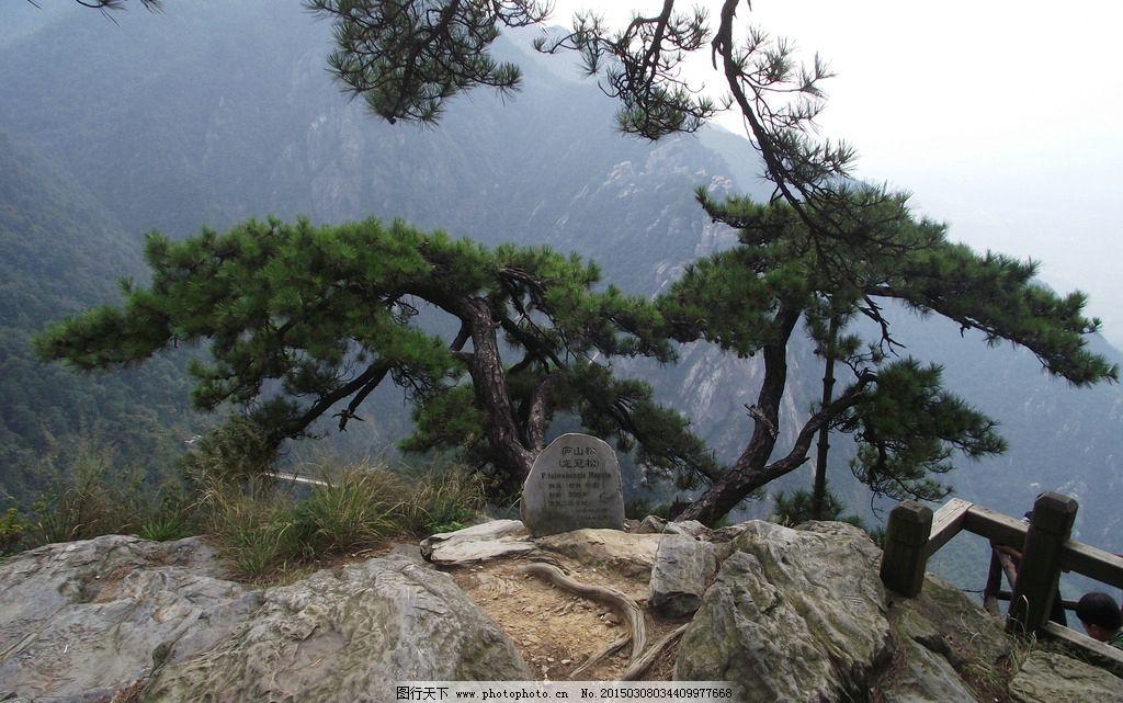 庐山 庐山松 奇景 景观 松树 摄影 自然景观 山水风景 72dpi jpg