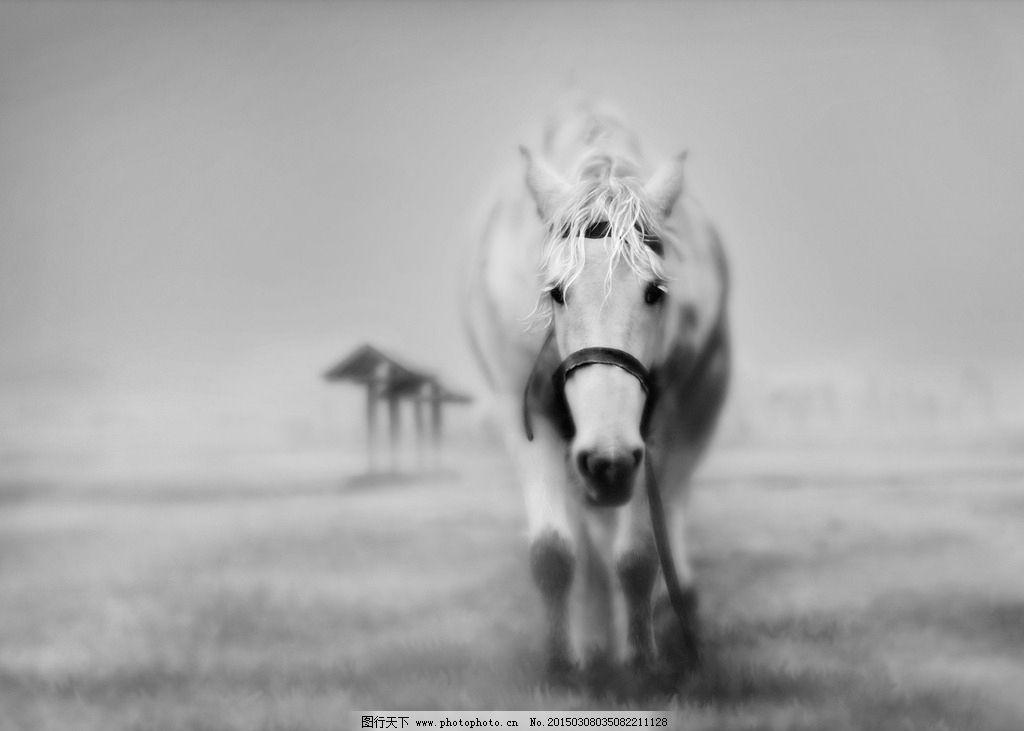 黑白 马 唯美 老马 动物摄影
