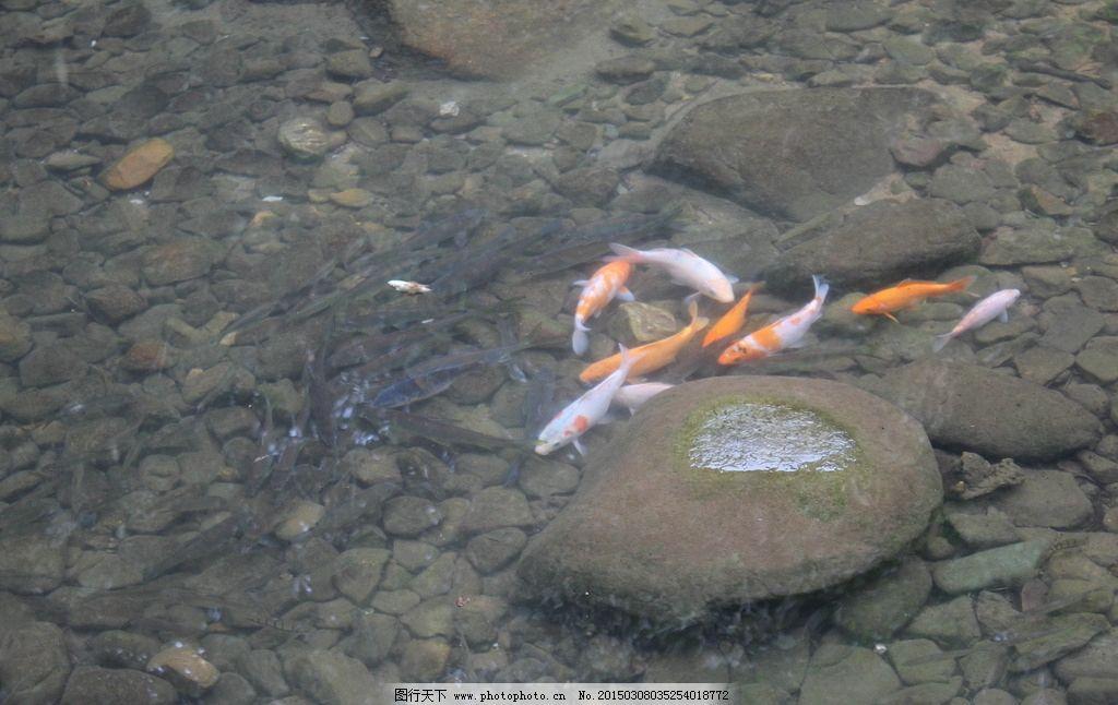 千岛湖 杭州 鱼类 生物世界