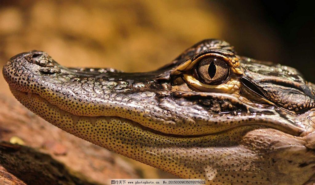 动物世界 动物 动物园 摄影 生物世界 野生动物 jpg 环境 鳄鱼 动物jp