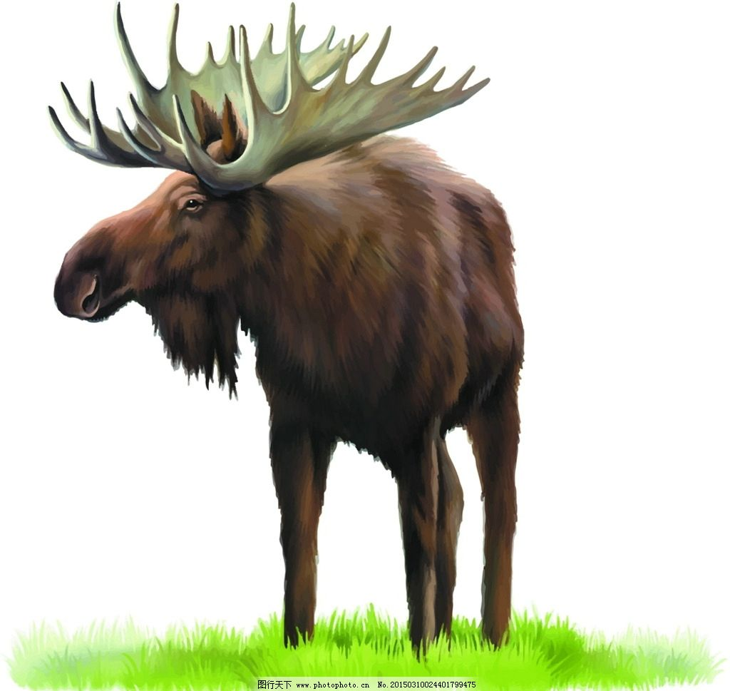 麋鹿 四不像 动物 野生动物 高清 矢量图 设计 生物世界 野生动物 eps