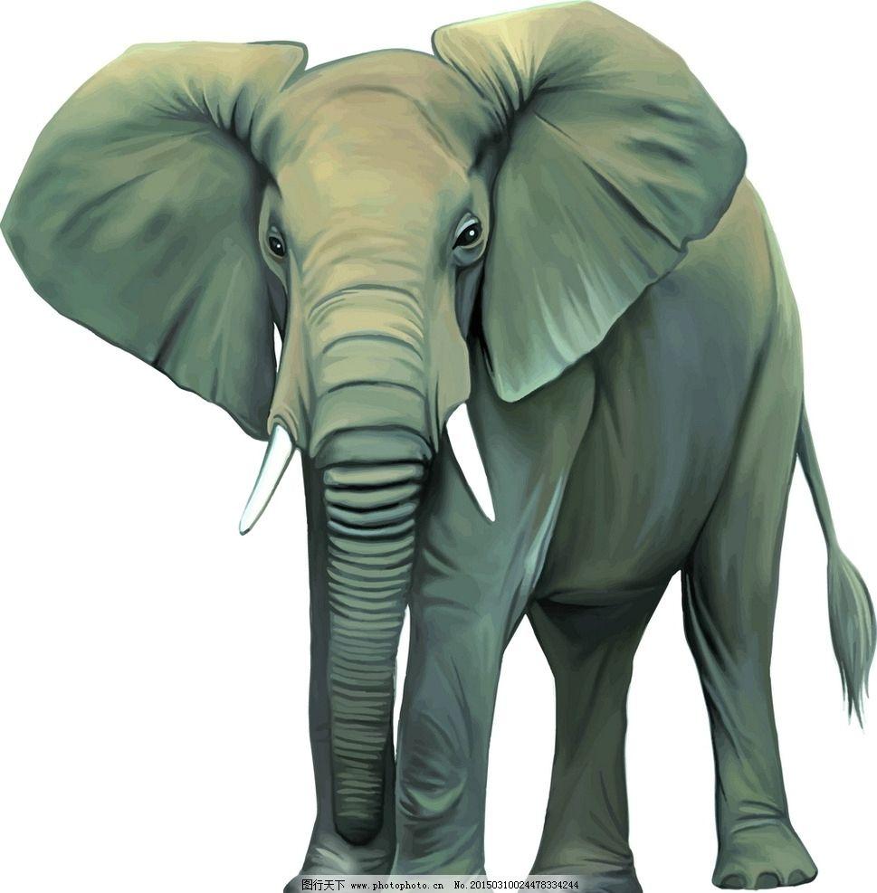 大象 动物 野生动物 高清 矢量图 设计 生物世界 野生动物 eps