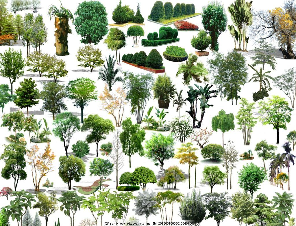 景观植物素材大全图片,风景 树木 花草 花草树木 树木
