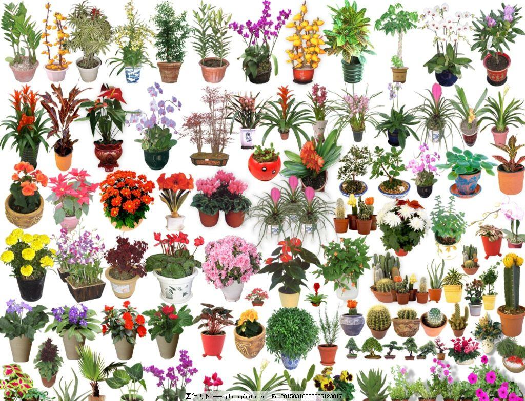 盆景花卉素材大全图片