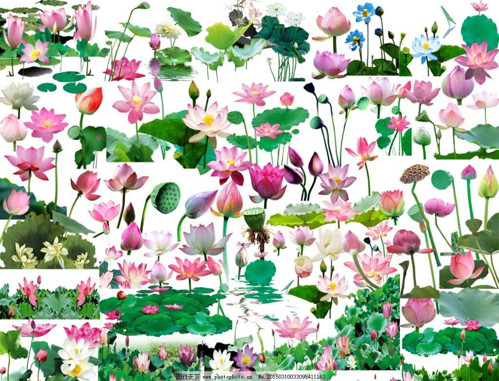 素材 手绘花卉素材 手绘