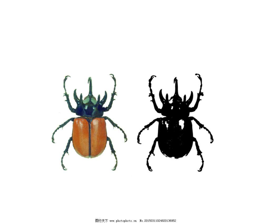 甲壳虫 昆虫 屎壳郎 虫子