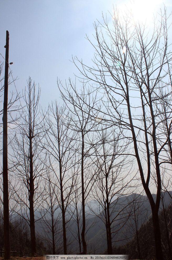冬天 树枝 干枯的树 树 阳光 摄影 自然景观 自然风景 72dpi jpg