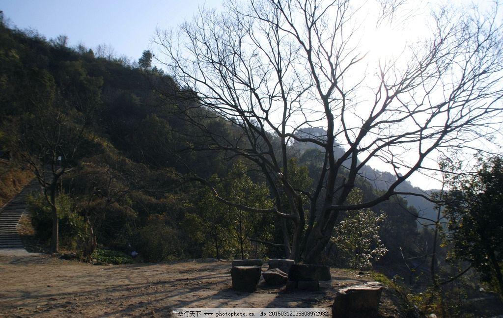 温州 君子峰 枯树 园林 风景 摄影 园林风光 摄影 生物世界 树木树叶