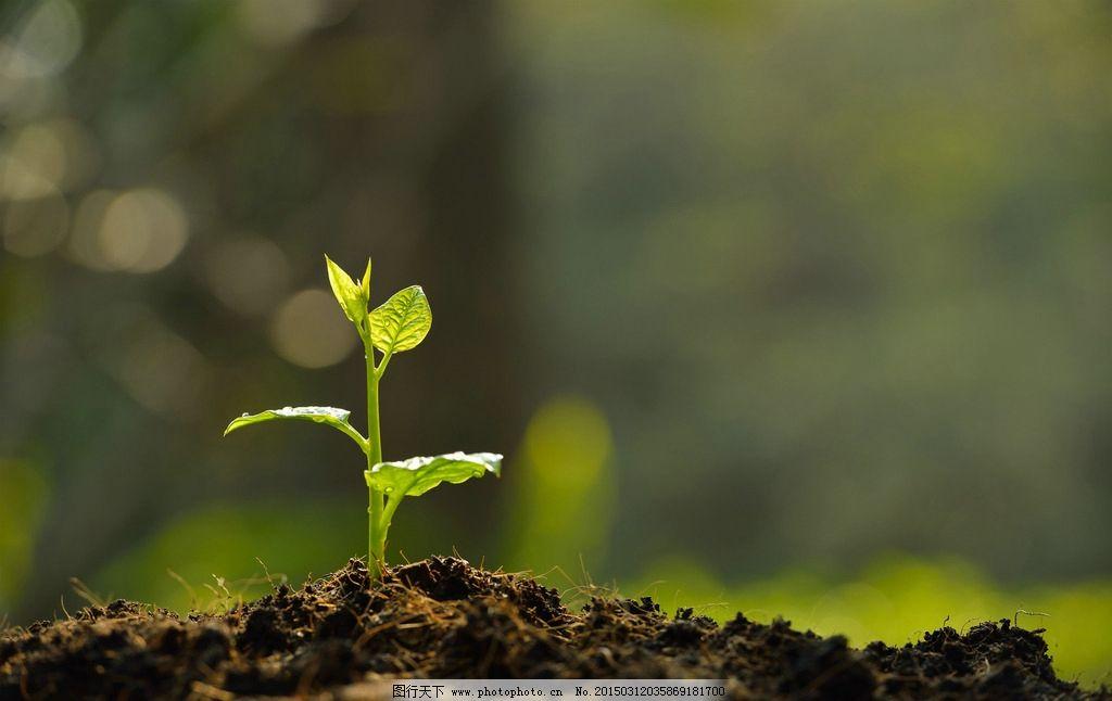 植物成长过程画图片