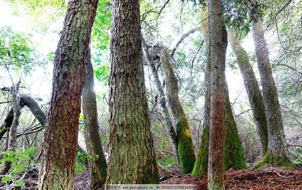 古树 老树 树木 树林 树叶 树枝 植物 大树 绿色 环保 树林树木 摄影